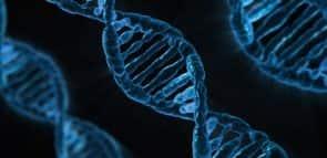 O que se estuda em Biomedicina?