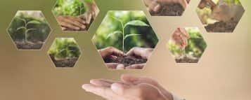 Técnico em Meio Ambiente: saiba como é e onde fazer