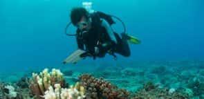 Descubra o que faz um biólogo marinho