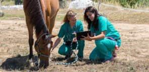 Saiba tudo sobre o curso de Veterinária na Anhanguera