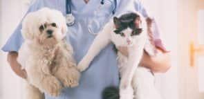 Descubra como conseguir uma bolsa para Medicina Veterinária
