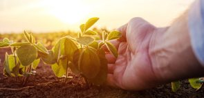 Gestão do Agronegócio: curso, profissão, mercado e faculdades