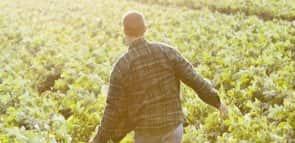 Agronegócios: saiba mais sobre este curso
