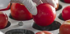 Descubra o que faz um engenheiro de alimentos