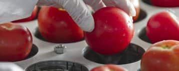 Engenharia de Alimentos: carreira e mercado