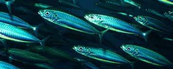 Engenharia de Pesca – Conheça mais sobre a carreira desse profissional