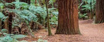 Gestão Ambiental: conheça o curso e onde estudar