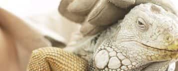 Zootecnia: saiba mais sobre essa carreira